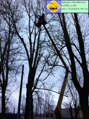 Вырубка деревьев Аренда автовышки (812) 642-40-61